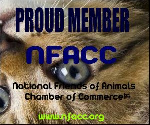 NFACCNOV206 300x250 NFACCNOV206